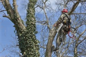 tree pruning Asheville