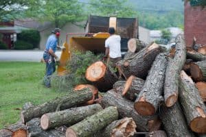 tree removal Asheville