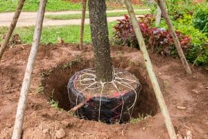 tree planting & transplanting nc