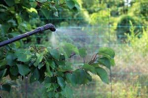 tree spraying & disease control Asheville NC